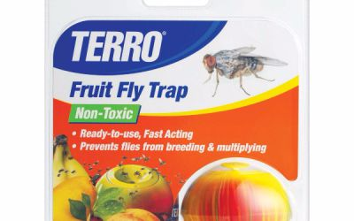 fruit fly trap.jpg